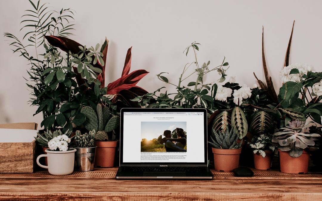 No Time to Blog? Book a Copywriter! – Mona Ali Photography