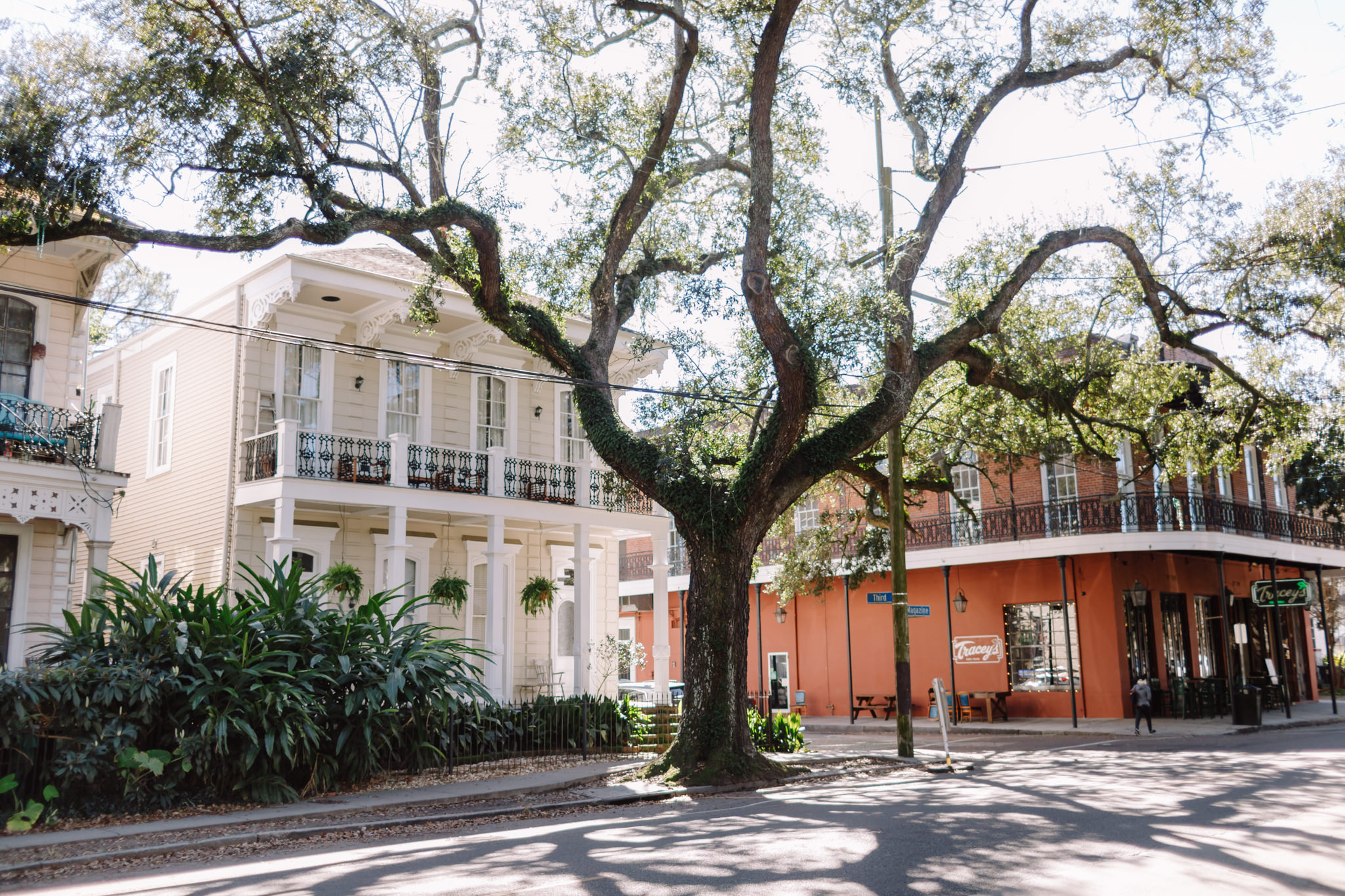 Tree in New Orleans street